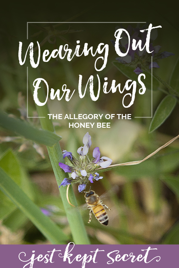 """Pinnable image for """"Wearing out our wings: the allegory of the honey bee"""""""