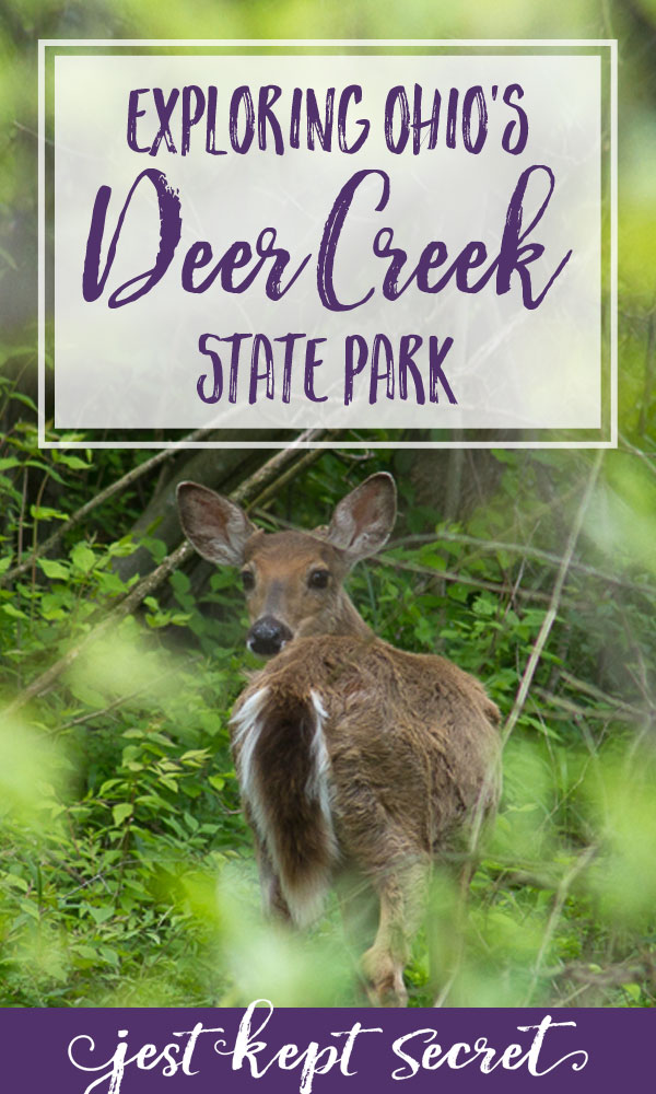 Pinnable image for Deer You Are: Playing Critter Eye Spy at Deer Creek State Park | Jest Kept Secret
