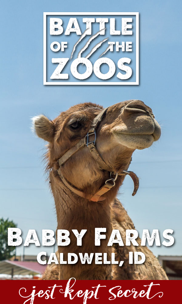 Battle of the Zoos: Babby Farms | Jest Kept Secret