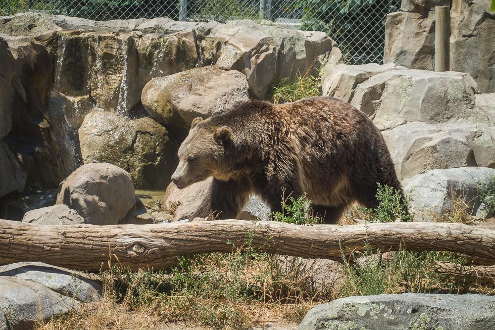 Battle of the Zoos: Hogle Zoo | Jest Kept Secret