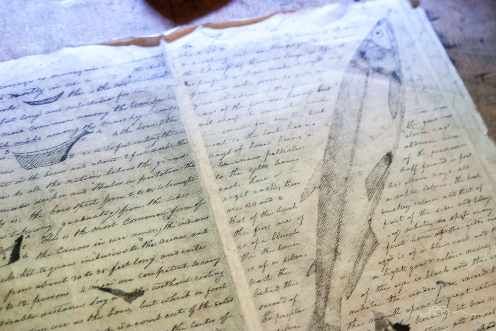 Journal of William Clark with a drawing of a fish