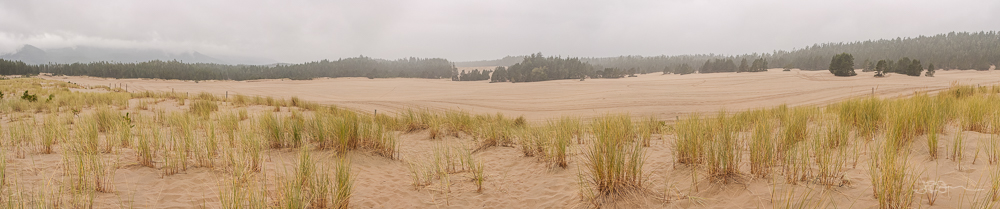 Panorama of sand dunes with trees in the background