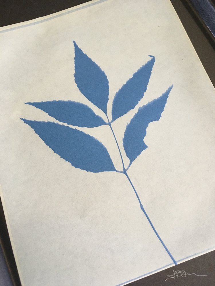 Dark blue leaf print on a light blue background