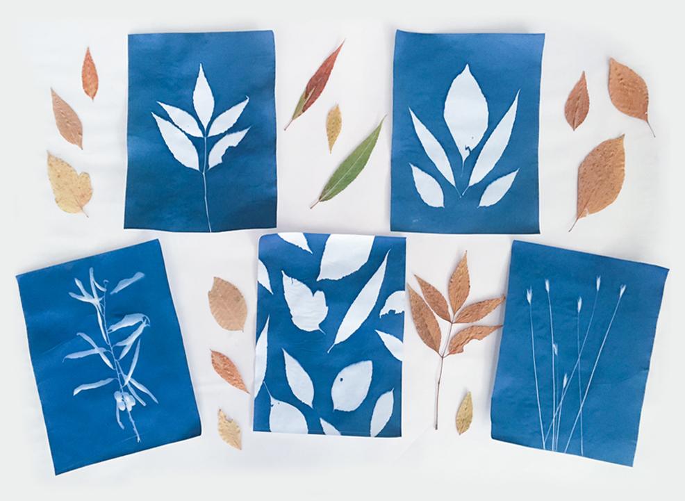 Five cyanotype prints of fall leaves
