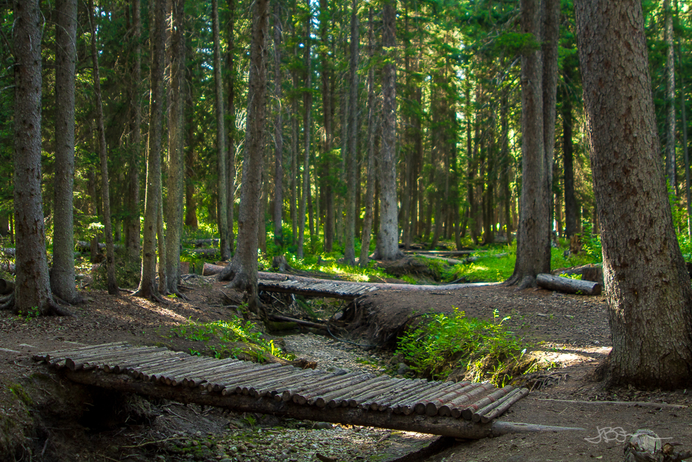 Log bridges spanning dry creek bed in a forest