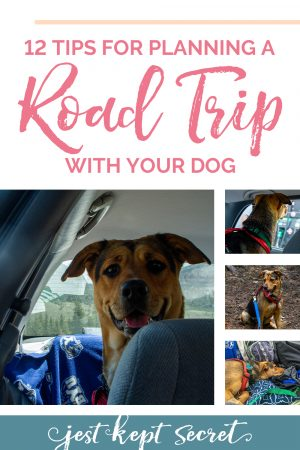 12 Tips for Planning a Road Trip with Your Dog from Jest Kept Secret